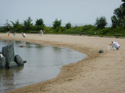 海岸での貝殻取り